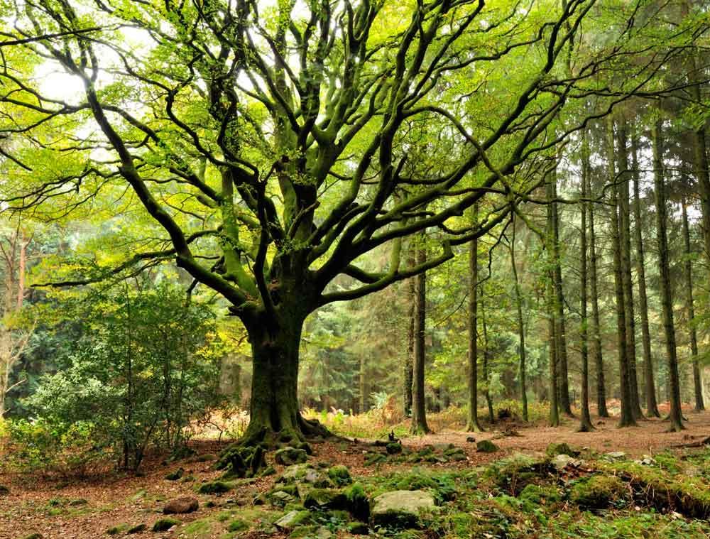 La Forêt de Brocéliande
