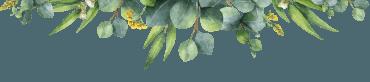nature préservée Brocéliande