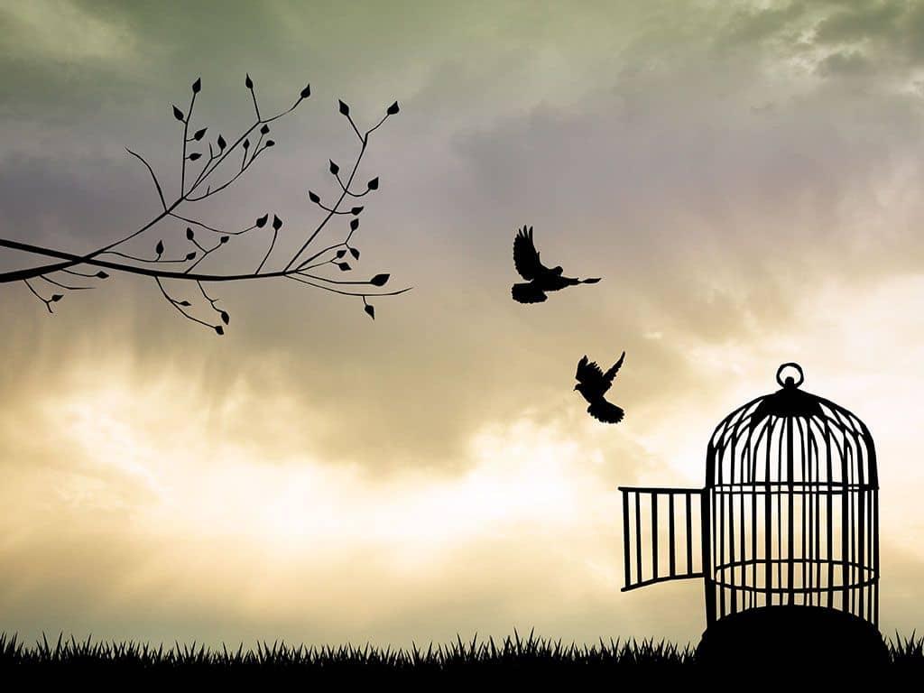 oiseaux libres cage