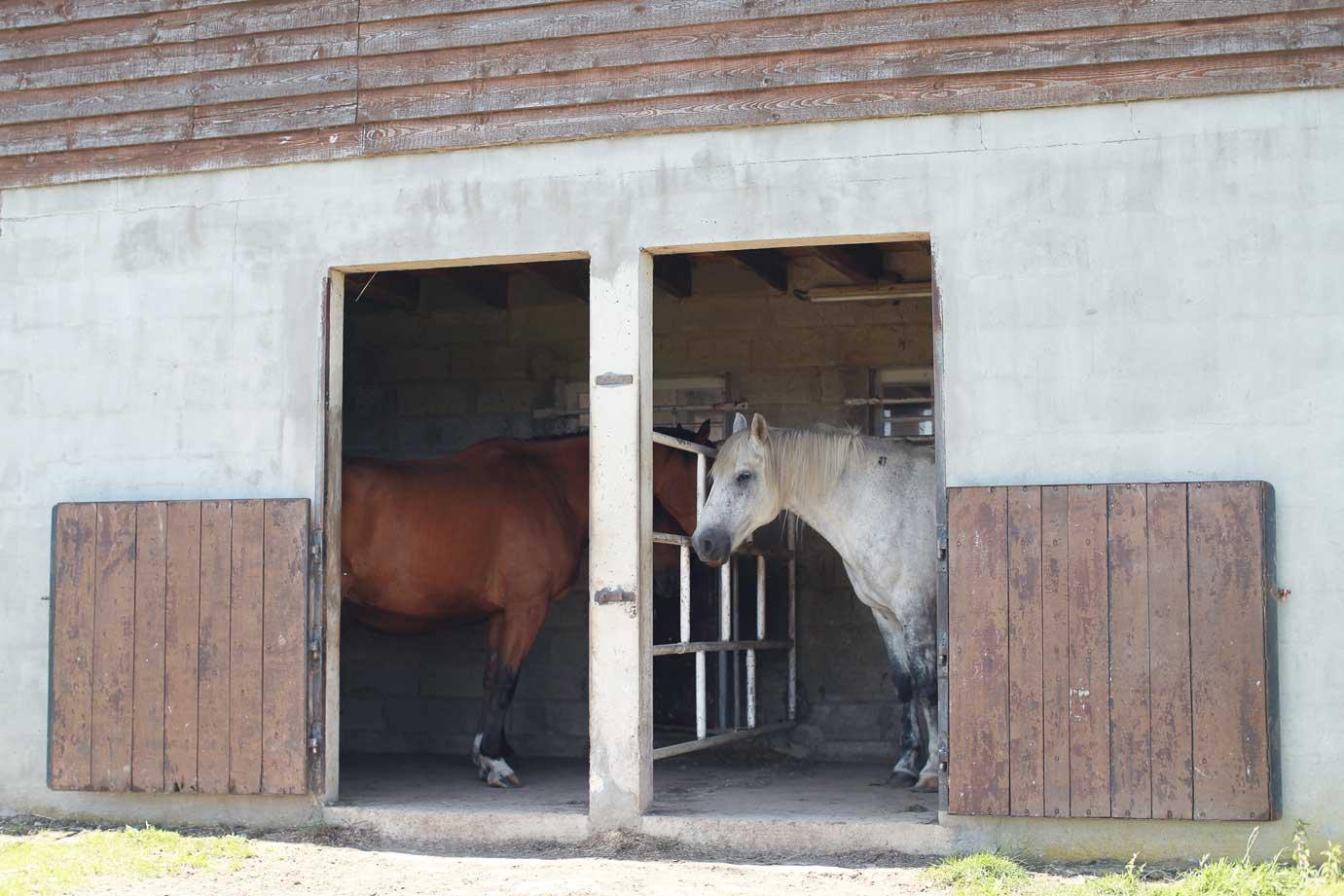 paddocks-chevaux-gite-la-hulotte-broceliande-bretagne
