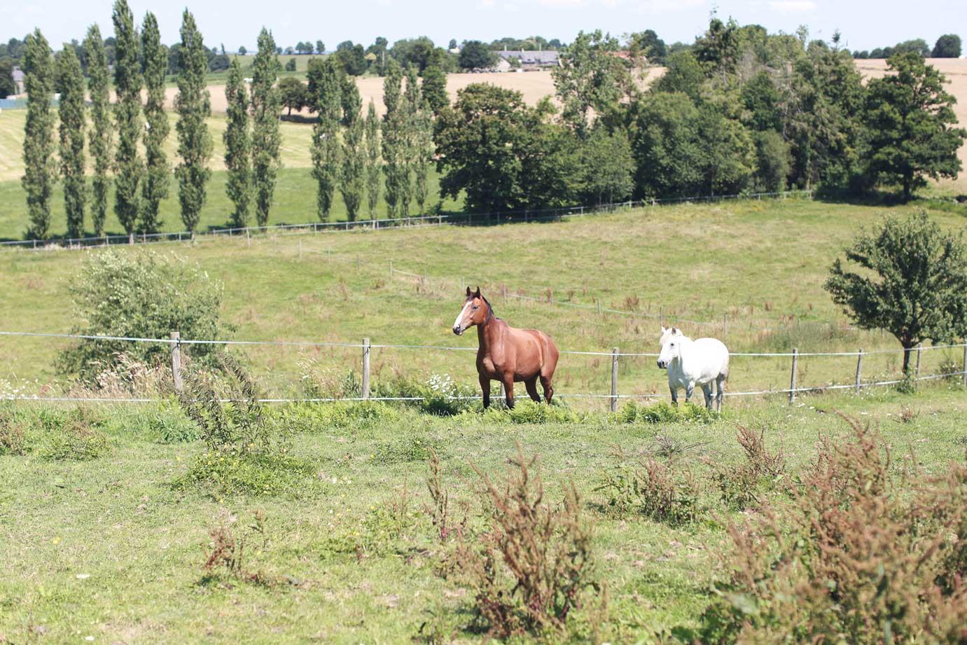 chevaux-paturages-gite-la-hulotte-broceliande-bretagne